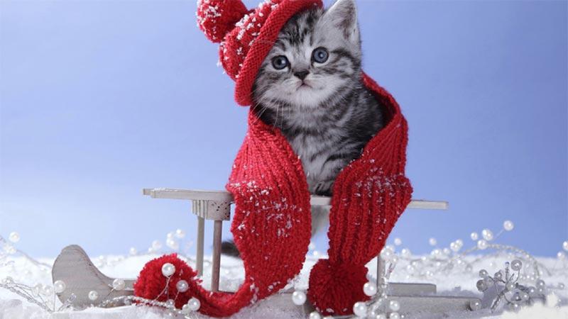 Immagini Natale Con Gatti.Immagine Gatto Natale Con Berretto Immagine Natale Gatto